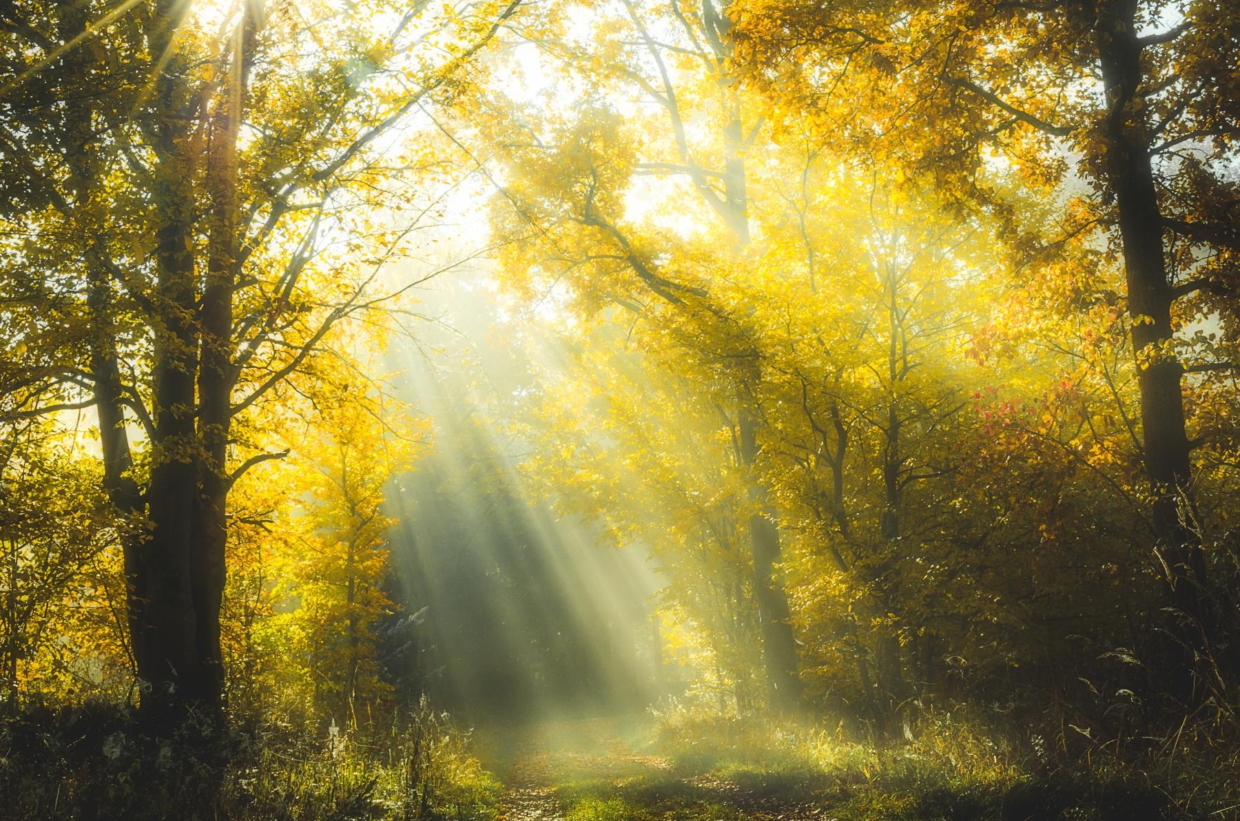 Ein morgendlicher Spaziergang durch Hessen schöne Wälder