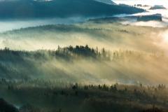 Morgennebel in der winterlichen Rhön