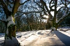 Die alten Bäume am Altkönig an einem Wintermorgen