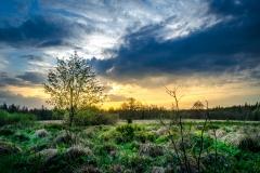 Das Moor am Hoherodskopf