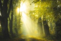 Herbstmorgen in den Wäldern des Vogelsbergs