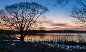 Nieder-Mooser-Teich-Sonnenuntergang