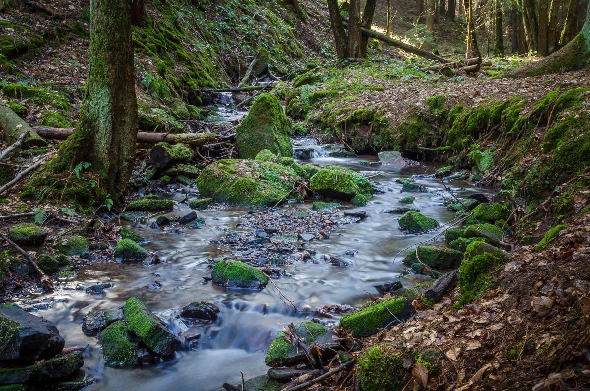 Das Wasser des Lochbachs hat über die Jahre eine tiefe Schlucht gegraben.