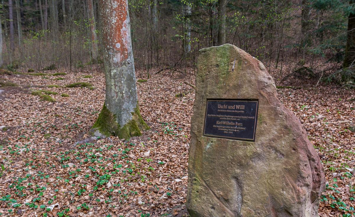 Uschi und Willi die höchsten Bäume des Burgwald