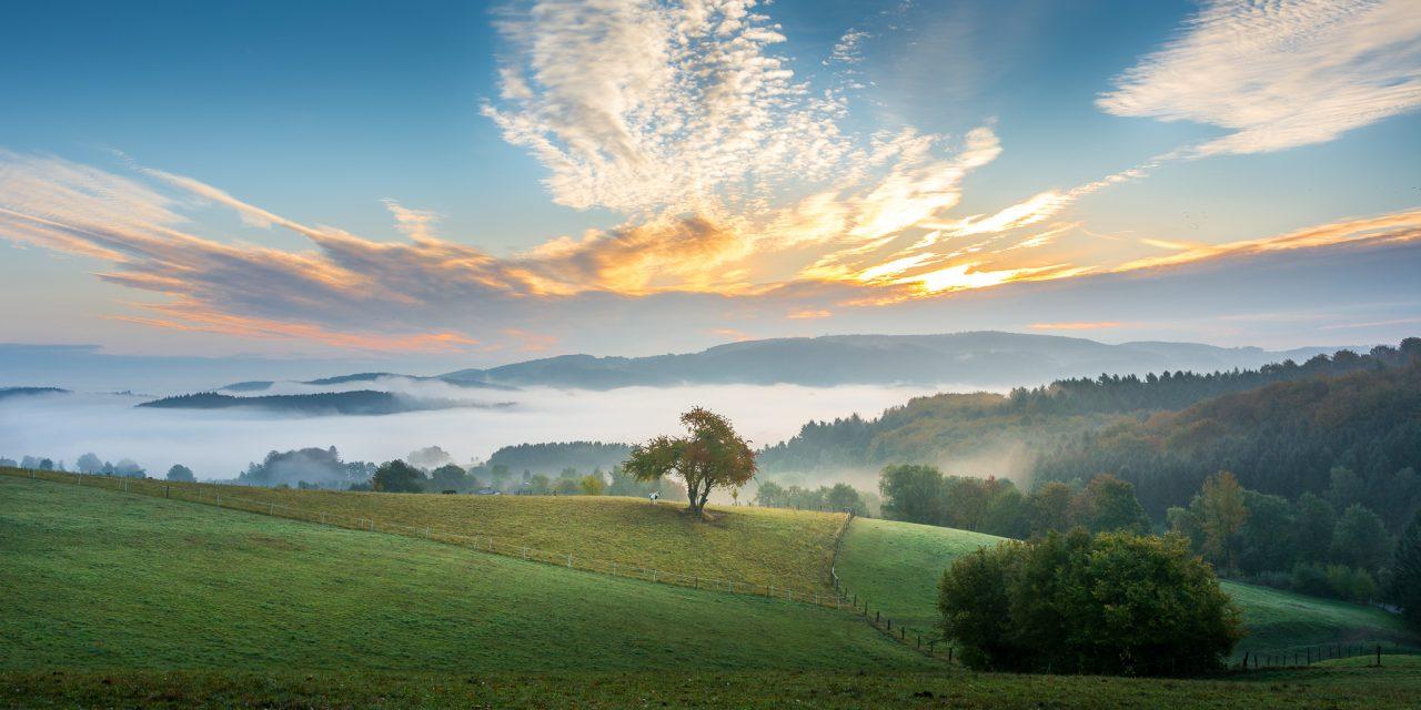 Früher Morgen im Odenwald