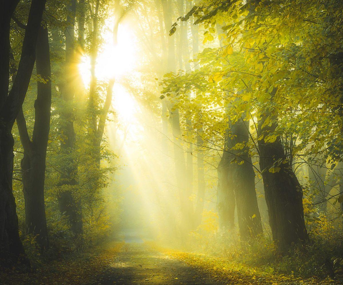 Hessens Wälder