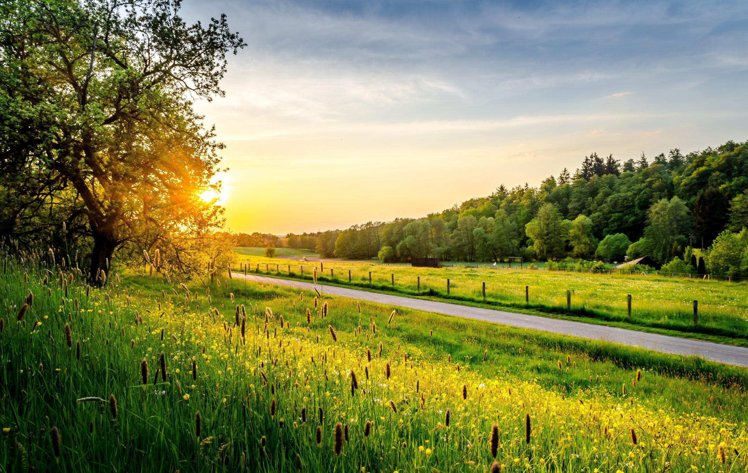 Frühlings-Blumenwiese in Hessen bei Sonnenuntergang