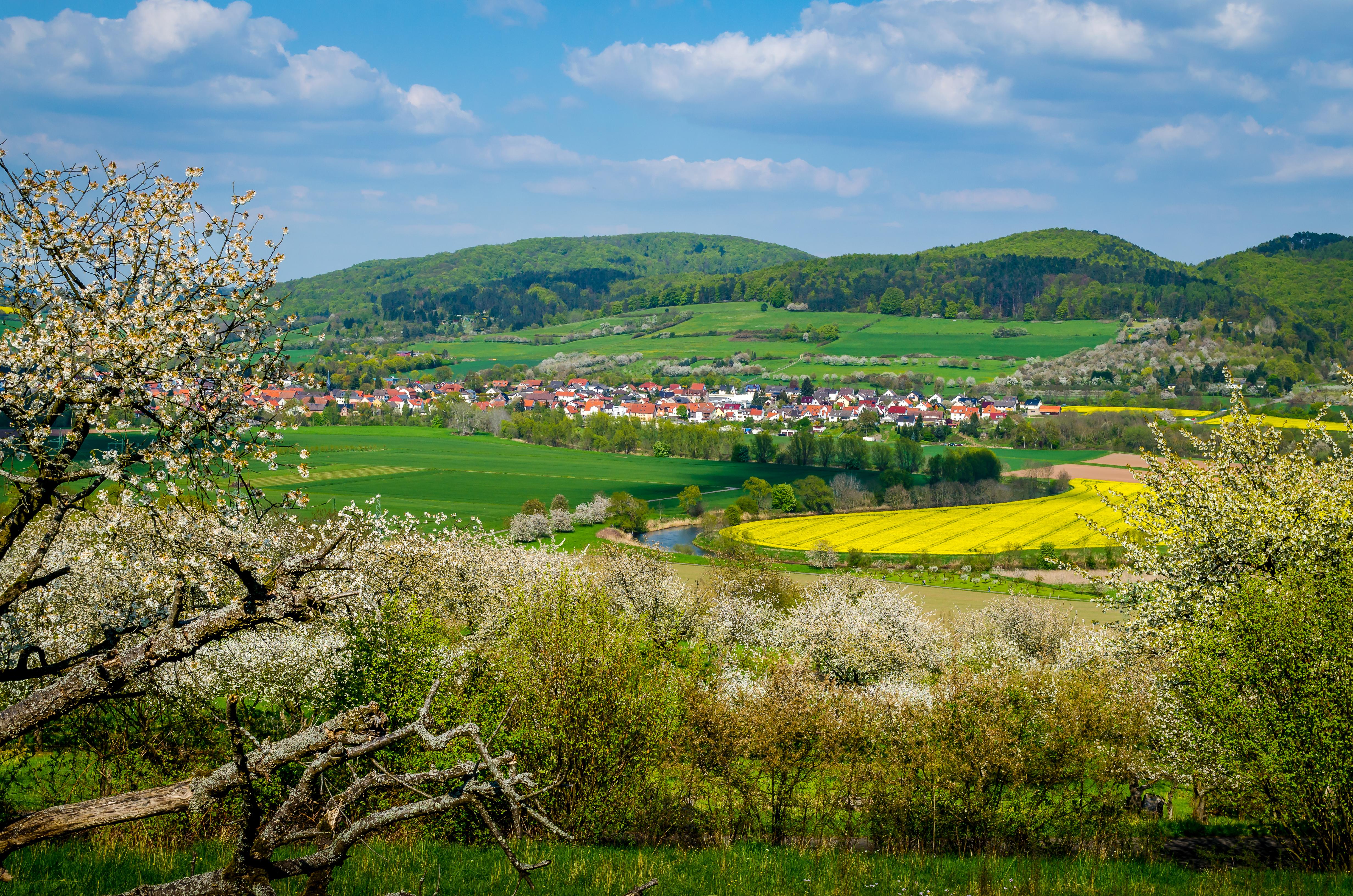 Kirschblüte bei Witzenhausen im Werra-Meissner-Kreis