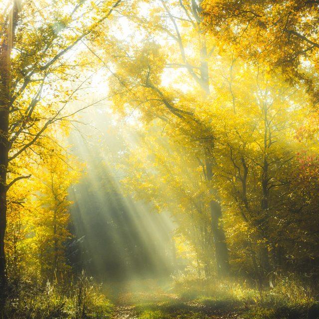Sonnenstrahlen fallen durch den Nebel in einem herbstlichen Wald in Hessen
